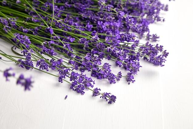 Mazzo di fiori freschi di lavanda naturale steli su sfondo bianco