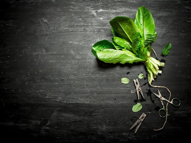 Mazzo di acetosa fresca con mollette. sul tavolo di legno nero.