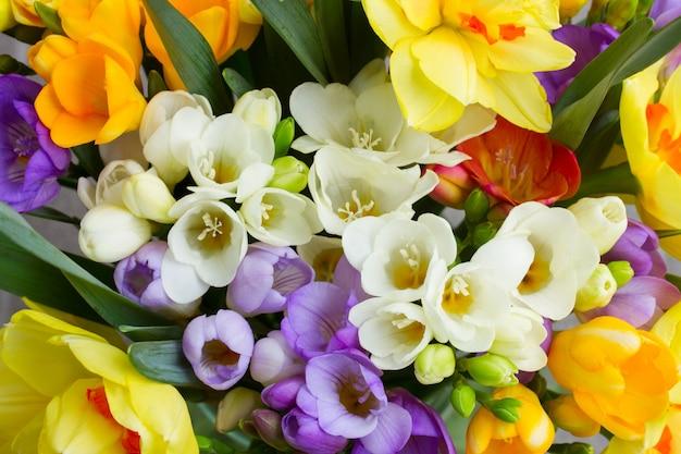 Mazzo di fiori freschi di primavera freesea si chiuda