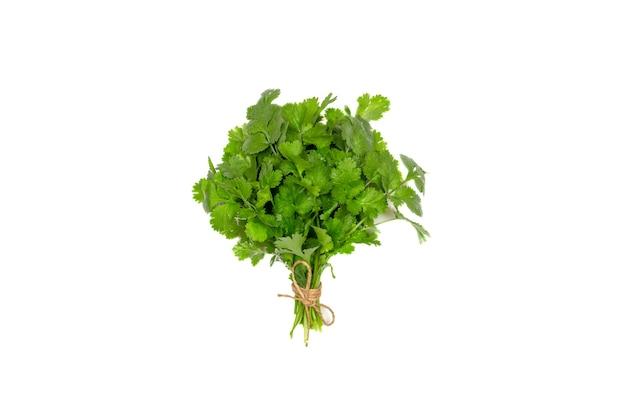 Un mazzo di foglie di coriandolo verde legate con spago isolato su uno sfondo bianco