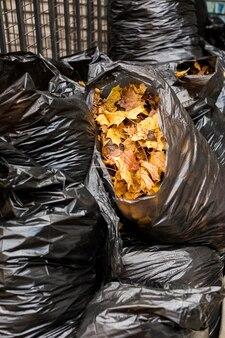 Mazzo di foglie d'acero in sacchi neri.