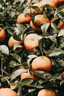 Un mazzo di arance durante la primavera in una struttura ad albero dai toni colorati