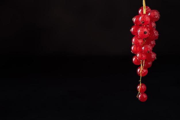 Un grappolo di ribes rosso maturo su sfondo nero
