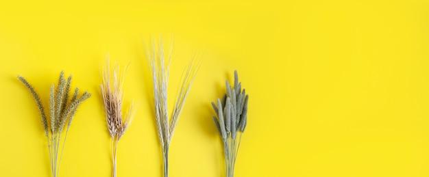 Fasci di erba secca - segale, frumento, timopo, prato di coda di volpe su uno sfondo giallo