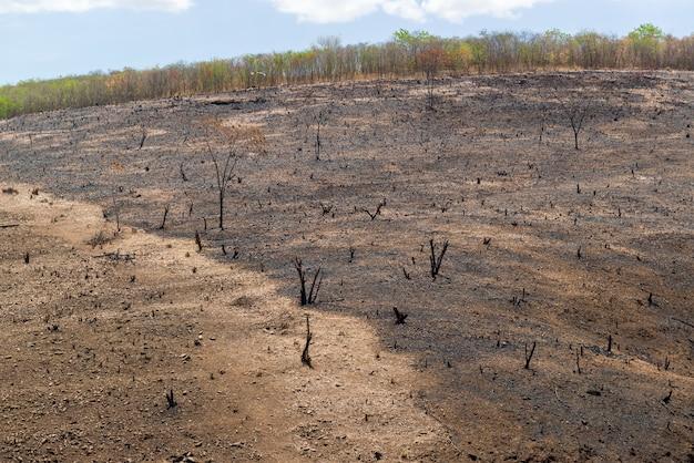 Deforestazione in fiamme del bioma brasiliano caatinga nel barro ceara brasile il 21 dicembre 2020