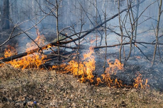 Foresta di pini in fiamme con fumo e fiamme