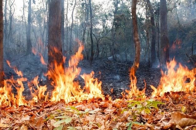 Bush fire nella foresta tropicale