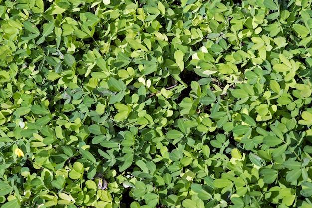 Bush formato da foglie verdi
