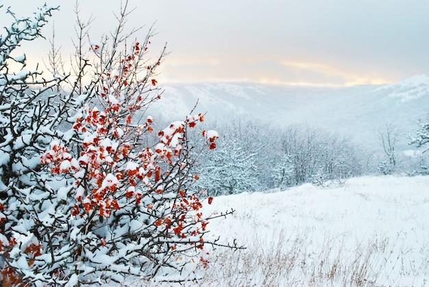 Cespuglio con foglie rosse secche sul paesaggio invernale