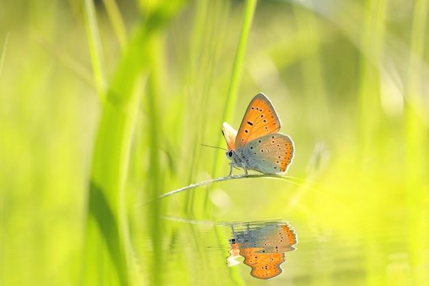 Farfalla tra l'erba verde fresca al sole
