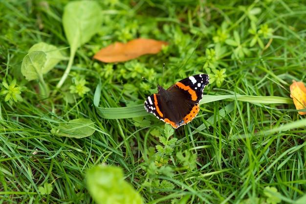 Farfalla sullo sfondo dell'erba di salamoia