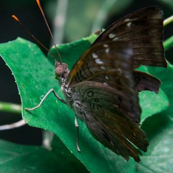Farfalla su foglie marroni