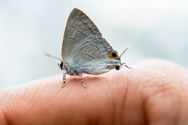 Farfalla sul dito donna in natura