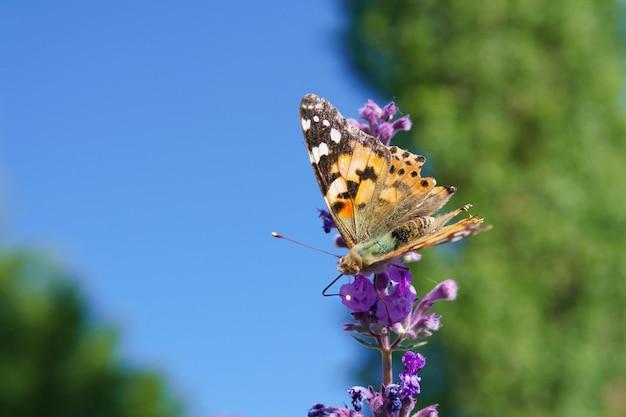 Farfalla su un fiore che beve nettare al mattino in una giornata di sole