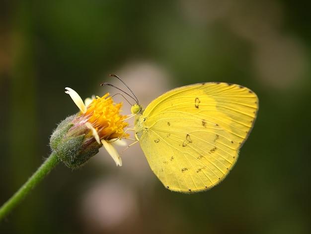 Farfalla sul fiore nel giardino Foto Premium
