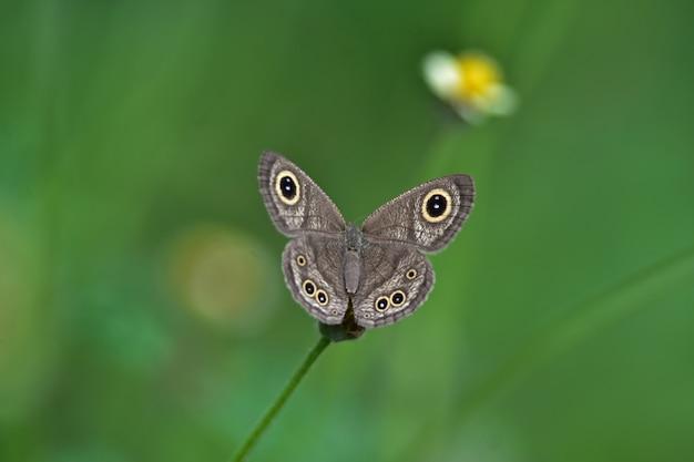 Farfalla sul fiore in un prato, in primo piano di primavera di una macro.