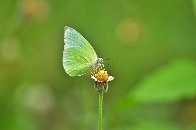 Farfalla sul fiore in un prato, in primo piano di primavera di una macro. Foto Premium
