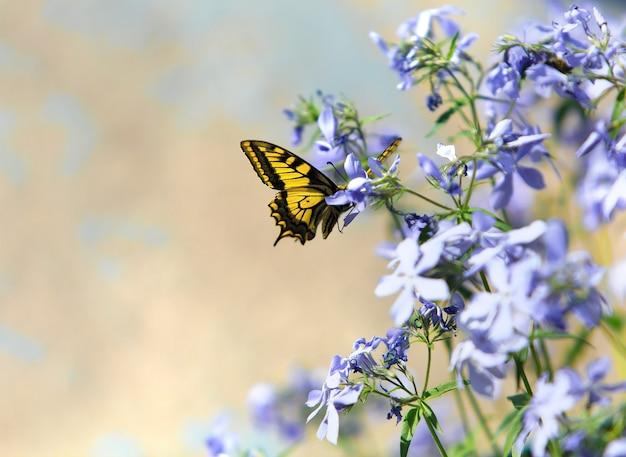 Farfalla sui fiori in un giardino