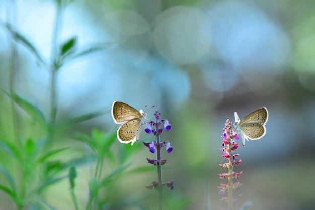 Farfalla sui fiori con sfondo bokeh