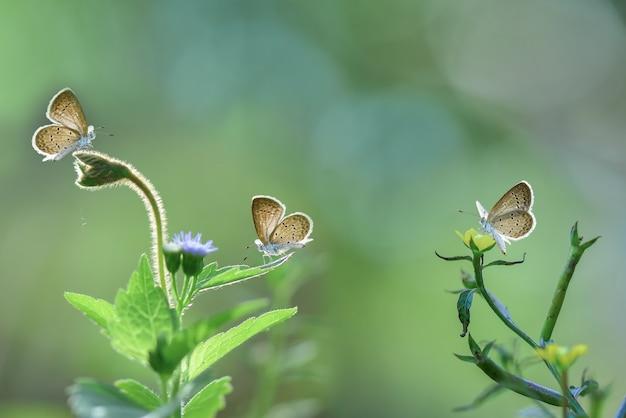 Farfalla su fiori con sfondo verde