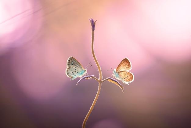 Farfalla sui fiori con lo sfondo della natura