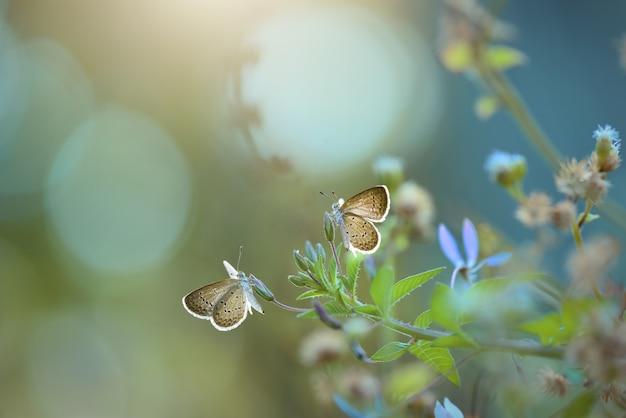 Farfalla sui fiori con sfondo bokeh natura
