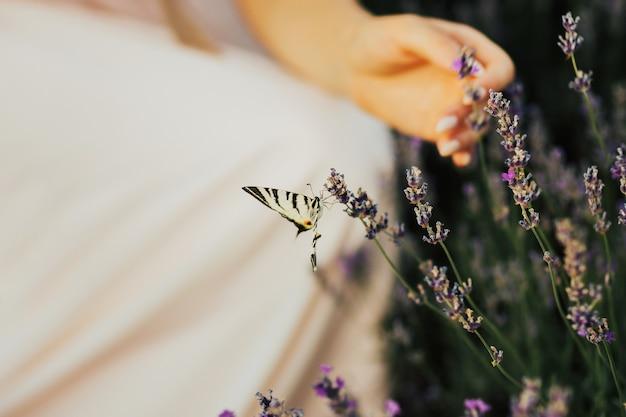 Farfalla sul fiore di lavanda.