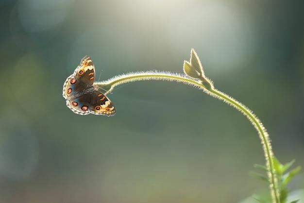 Farfalla su una foglia su uno sfondo di natura
