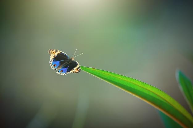 Farfalla su foglia con sfondo naturale