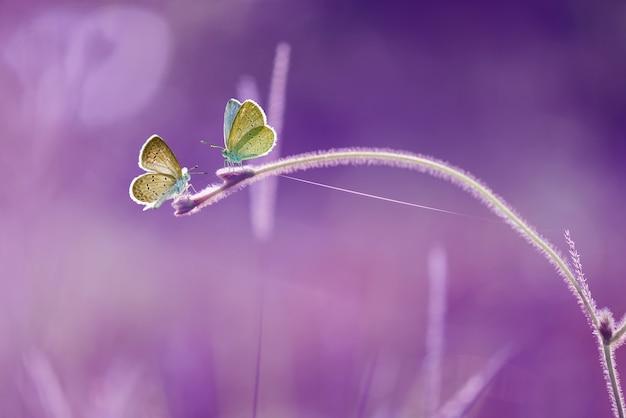 Farfalla sulla foglia con sfondo viola