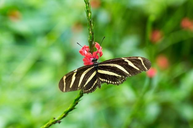 Farfalla in congedo, sullo sfondo della natura
