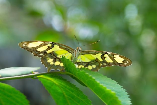 Farfalla in congedo