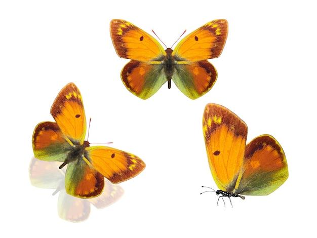 La farfalla. falene isolate su uno sfondo bianco. insetti tropicali. foto di alta qualità