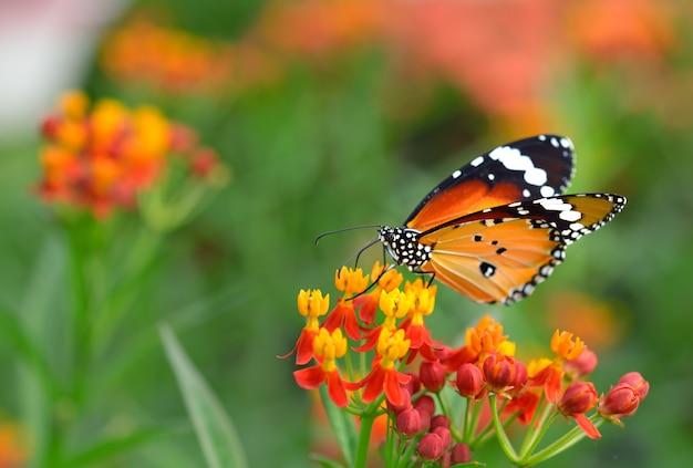 Farfalla sul fiore arancio nel giardino