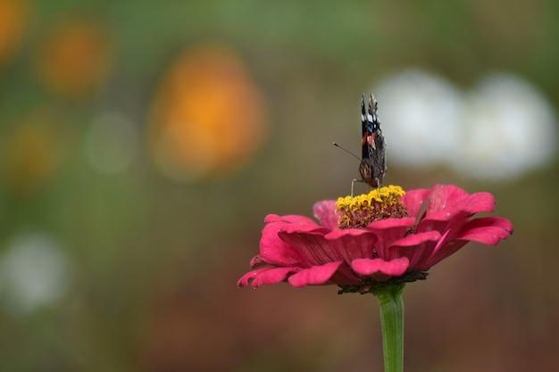 La farfalla si siede su un fiore in giardino