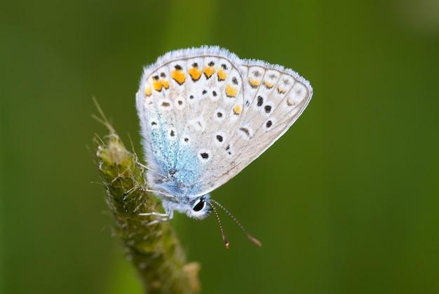 Farfalla su un ramoscello