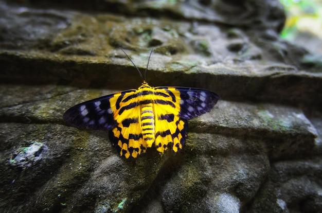 Una farfalla con il suo colore unico giallo e nero, era seduta su un forte pilastro
