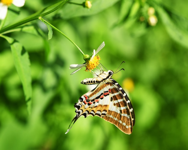 Farfalla sul fiore giallo in giardino