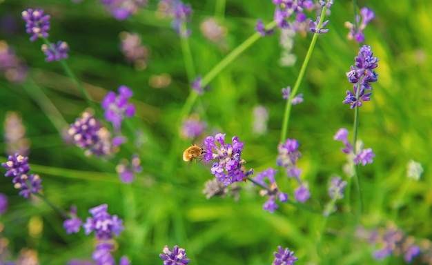 Ronzato benissimo sui fiori. messa a fuoco selettiva. natura.