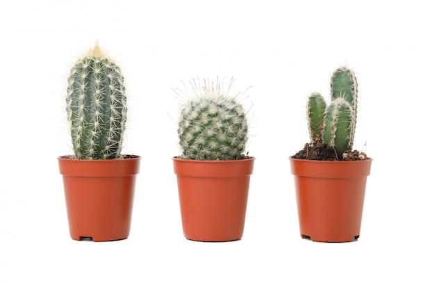 Cactus in vasi isolati su superficie bianca