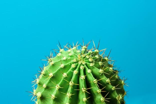 Cactus sul primo piano sfondo blu