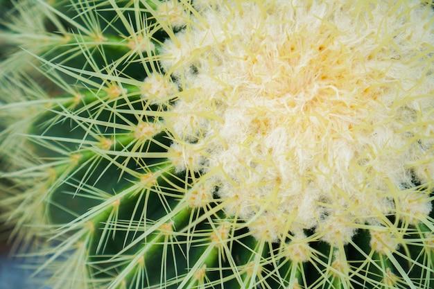 Foto del primo piano del cactus