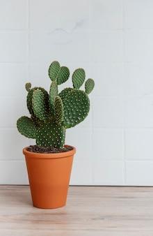 Cactus opuntia in vaso sul tavolo, pianta della casa