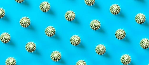 Modello di cactus sull'azzurro