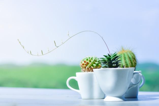 Vasi di cactus da una tazza da caffè. concetto. sfondo morbido