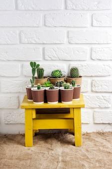 Raccolta di cactus e piante grasse in bicchieri di carta sul piccolo tavolo giallo