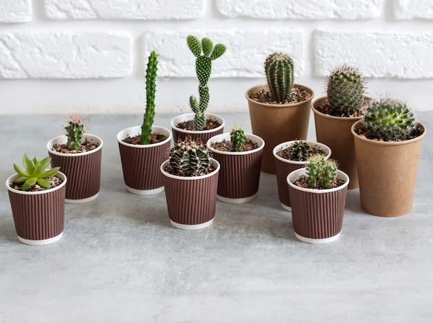 Collezione di cactus e piante grasse in bicchieri di carta