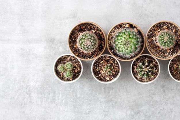 Raccolta di cactus e piante grasse in piccoli bicchieri di carta su cemento