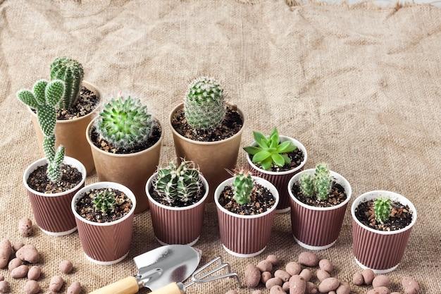 Collezione di cactus e piante grasse in piccoli bicchieri di carta