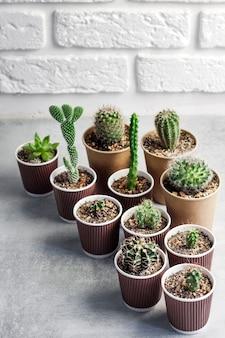 Collezione di cactus e piante grasse in bicchierini di carta